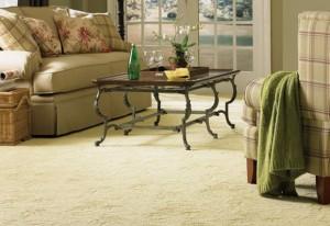 Consejos para limpiar moquetas con host limpieza de - Como limpiar alfombras en seco ...