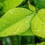Beneficios de la limpieza ecológica de moquetas y alfombras