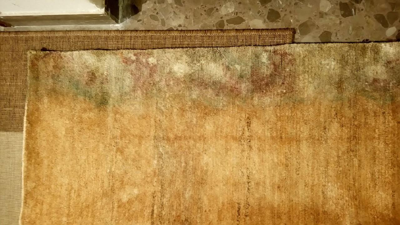 5 señales que indican que moquetas y alfombras tienen moho